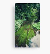 River Green II Canvas Print