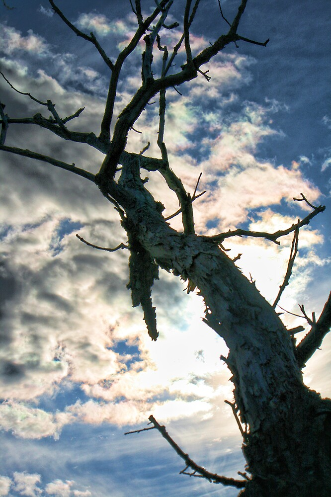 Dead tree by GPMPhotography