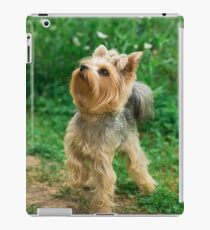 Yorkshire terrier on a walk on a path iPad Case/Skin