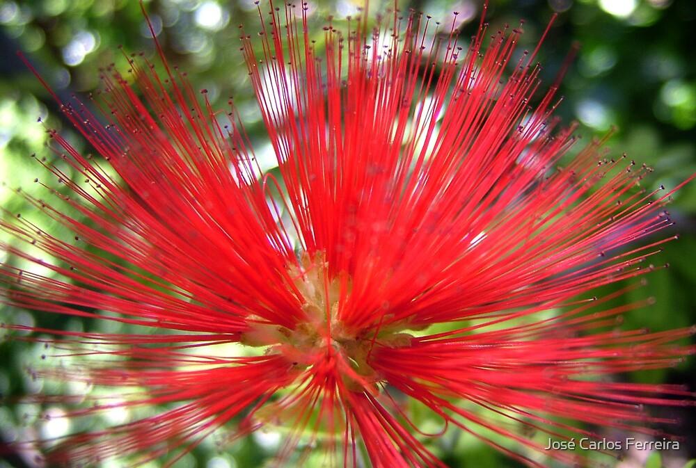 Exotic flower by José Carlos Ferreira