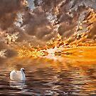 Swan at Sunrise by Kathy Weaver