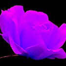 NEON ROSE by Johan  Nijenhuis