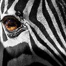 Zebra Eye by Kathy Weaver