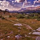 Mountain Trail - Beartooth Pass, Montana by Kathy Weaver