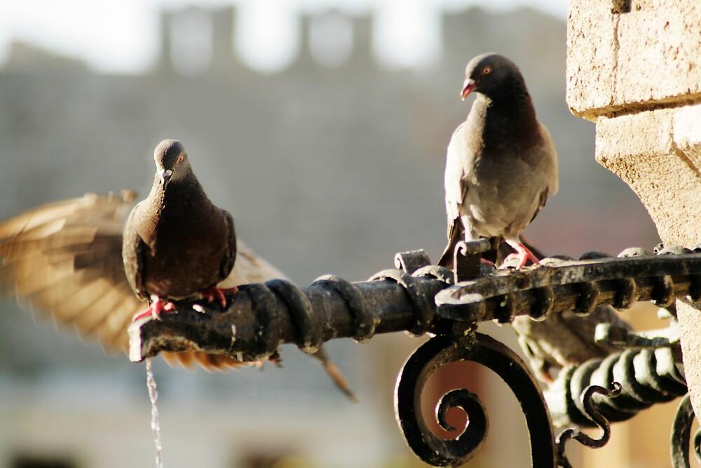 birds at water  by claudiaveja