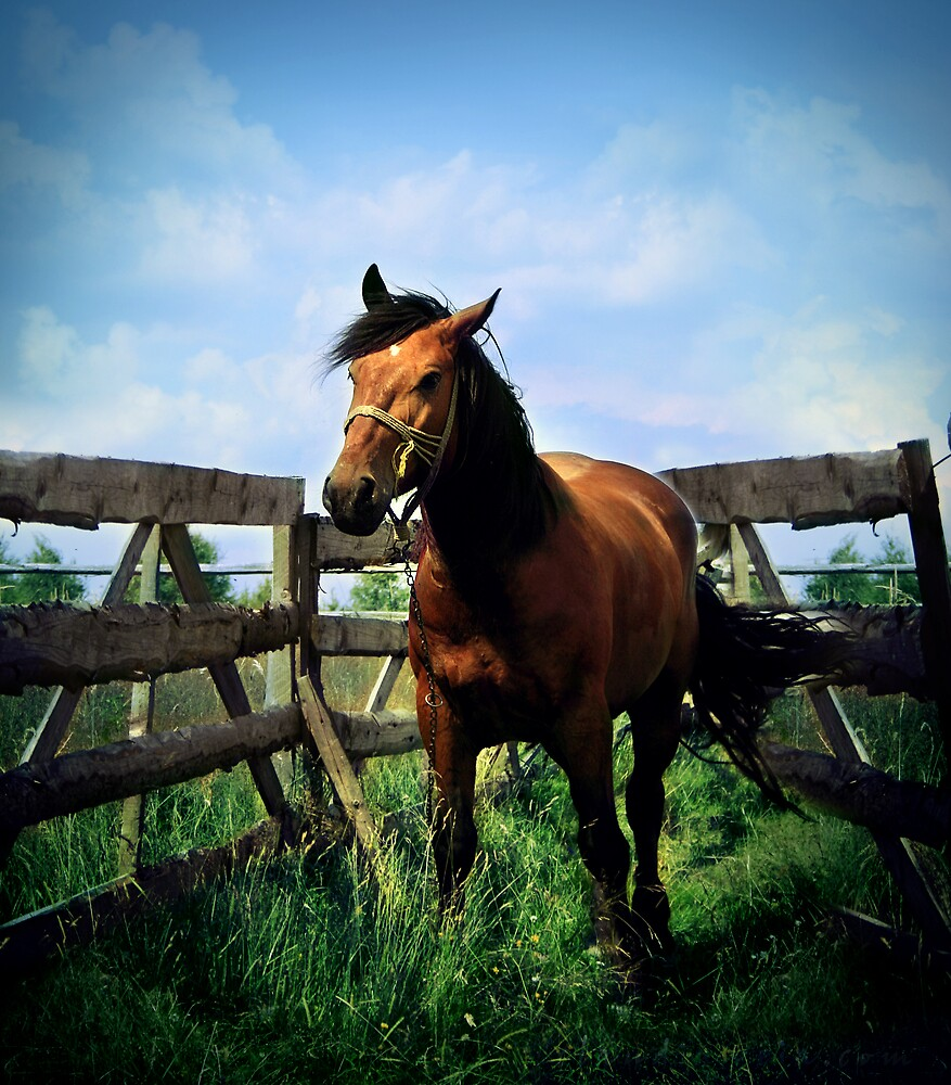 blue sky and beautiful horsy by claudiaveja