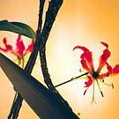Ikebana by Jenny Hall