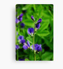 Violet Blue Canvas Print