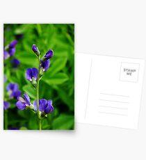 Violet Blue Postcards