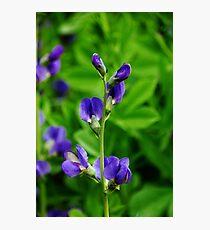 Violet Blue Photographic Print