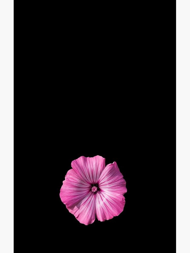 Pink Hibiscus Flower by sadler2121