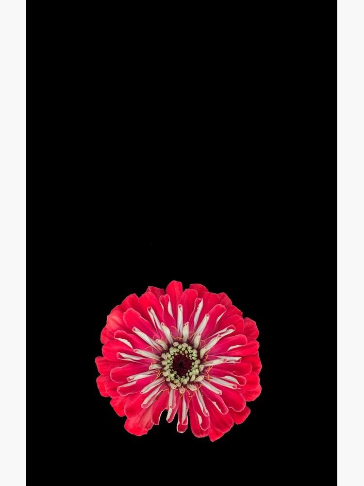 Red Zinnia Flower by sadler2121