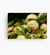 Nectaring Pearl Crescents Canvas Print