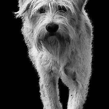 Dog - black and white by 3dgartstudio