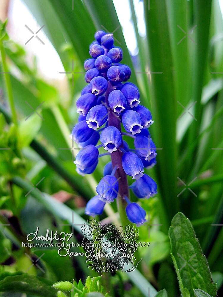 grape hyacinths  by LoreLeft27