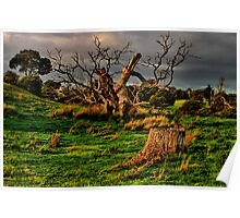 """Evening On The Floodplain"" Poster"