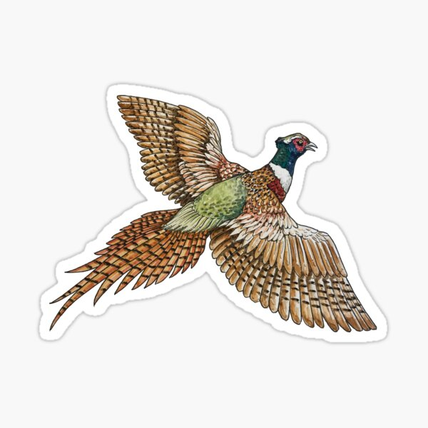 Flying Pheasant Sticker