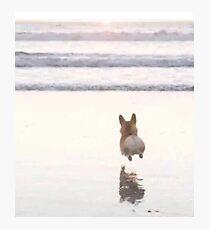 Leaping Corgi Photographic Print