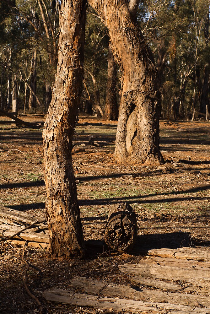 Barmah State Forest Red Gums by daveoh