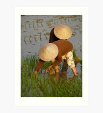 peoplescapes #97, planting rice Art Print