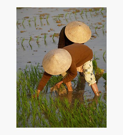 peoplescapes #97, planting rice Photographic Print