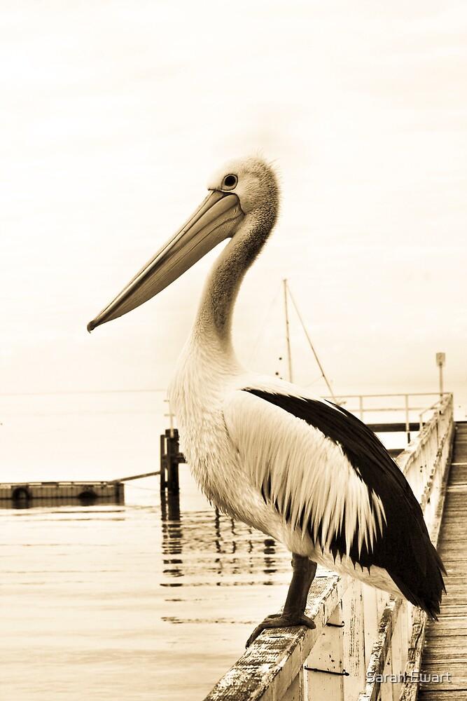 An Australian pelican. by Sarah Ewart
