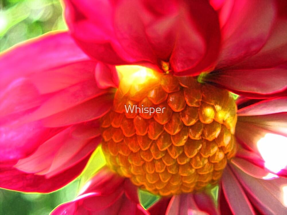 Vibrant! by Whisper