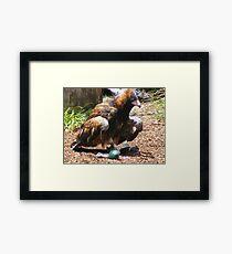 bird/owls - at Currumbin Sanctuary, Queensland (Aust) Framed Print
