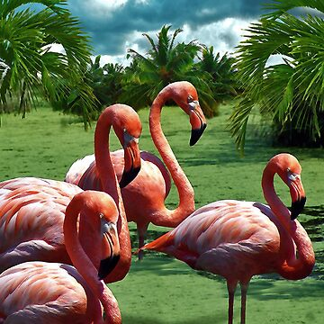 Pink Flamingos by johnny55