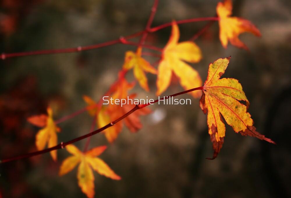 Weeping Autumn by Stephanie Hillson