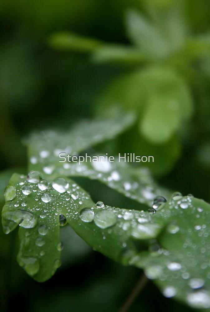 Diamond Dew by Stephanie Hillson