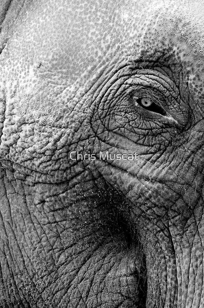 Elephant by Chris Muscat