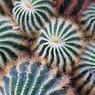 Cactus by Paula Bielnicka