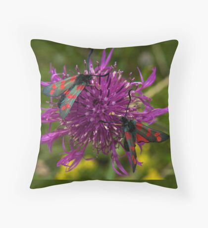 """Greater Knapweed with """"6-spot Burnet"""" Moths Throw Pillow"""