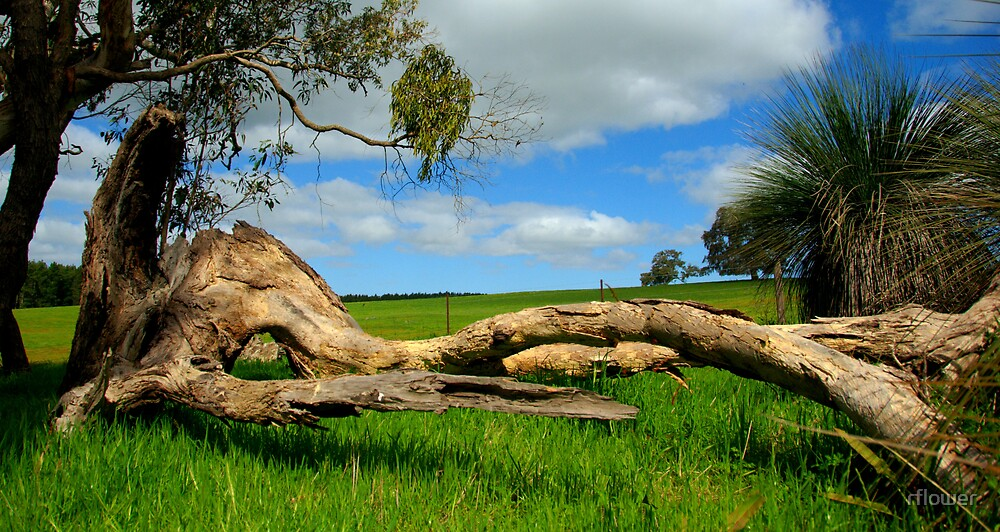 Tree put out to Pasture by rflower