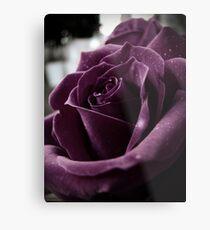 Purple Rose II Metal Print