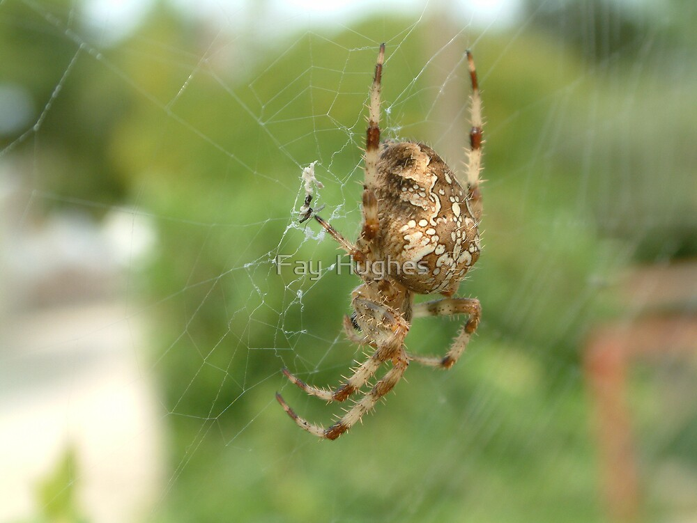 Spider's breakfast by Fay  Hughes