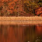 I Dream in Autumn Colors..... by Poete100