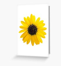 sunflower blossom patterns Greeting Card
