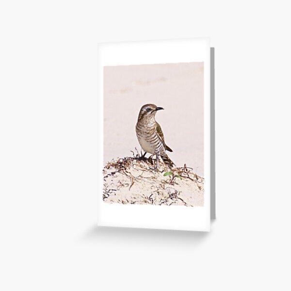 CUCKOO ~ Shining Bronze-Cuckoo by David Irwin Greeting Card