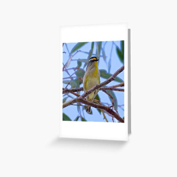PARDALOTE ~ Striated Pardalote by David Irwin Greeting Card