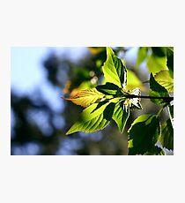 Lightful Autumn Photographic Print