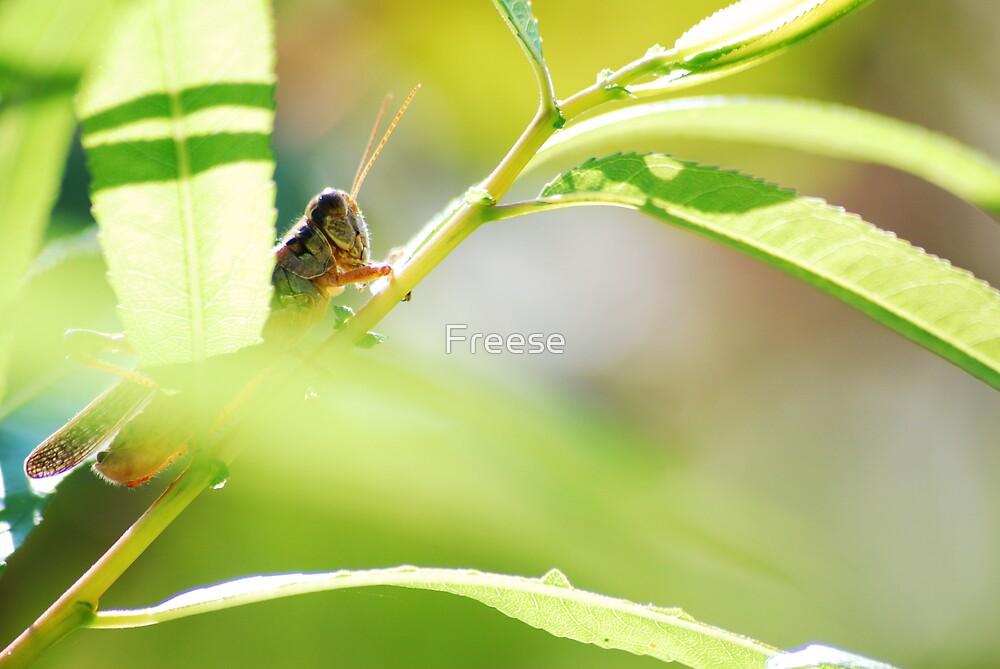 Peeking Hopper by Freese