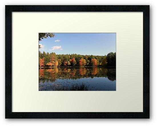 New Hampshire Foliage 2008 #12 by Len Bomba