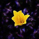 Liquid Flower XII by EbelArt