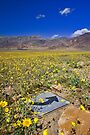 Death Valley Super Bloom This Way by photosbyflood