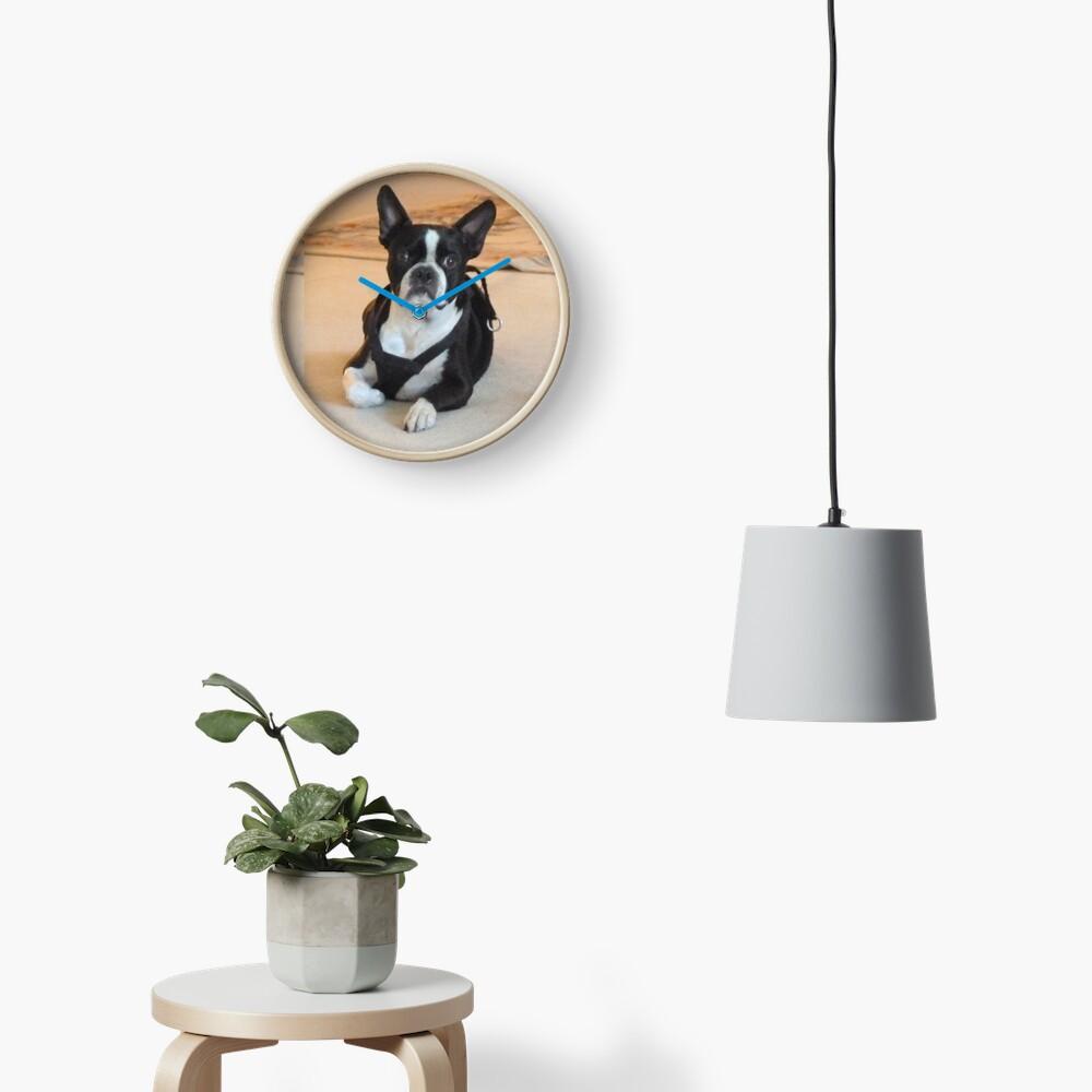 Yoda. Boston Terrier Clock