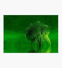 Terre verde  Photographic Print