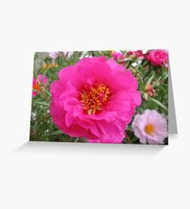Moss Rose Pink Greeting Card