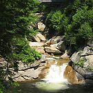 Sentinel Pine Bridge by Stormoak Lonewind